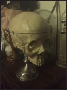 Human Skull Model on Antique Stand  Gothic Decor by DownADarkAlley