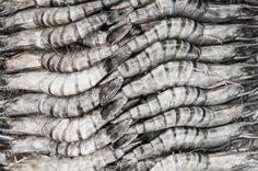 [von und mit: petra und alfonso] meeresfrüchte paella, oder: über la familia, meeresbewohner und die leckerste paella de mariscos