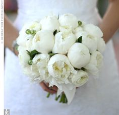 I am really concerned about my bouquet. I really want a white bouquet but for whatever reason I get the impression that my mom and flower lady are pus White Peonies Bouquet, Ranunculus Bouquet, White Ranunculus, White Flowers, Ranunculus Wedding, Boquet, Modern Wedding Flowers, White Wedding Bouquets, Flower Bouquet Wedding