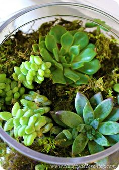 How to make a succulent terrarium - don't know if I could actually pull this off, but they look great!