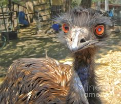 Petting Zoo Emu Painting