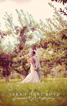 Orchard bliss