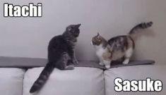 Naruto Cats GIF - Naruto Cats Sasuke - Discover & Share GIFs