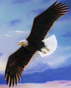 Eagle Painting | New Eagle Painting