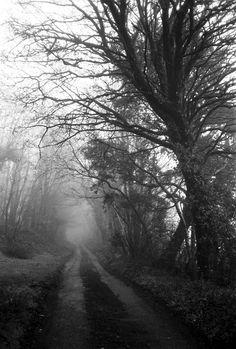 Ferryside Woods  Misty 35mm Black & White Film