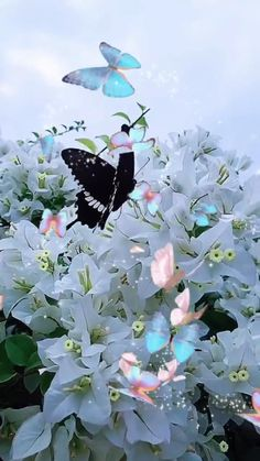 Nature Pictures Flowers, Wallpaper Nature Flowers, Beautiful Landscape Wallpaper, Beautiful Flowers Wallpapers, Beautiful Photos Of Nature, Beautiful Gif, Flowers Nature, Flower Pictures, Beautiful Butterflies