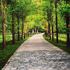 driveway with cobblestones and allée of trees