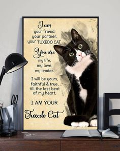 Paper Wall Art, Canvas Paper, Starry Night Art, Cat Posters, Cat Wall, Print Pictures, Funny Cats, Poster Prints, Poster Wall