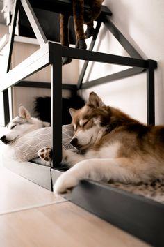 Die 12 Besten Bilder Von Hundehutte Selber Bauen Animais Animales