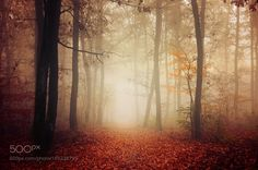 Autumn Walk LIX. by realityDream #nature #mothernature #travel #traveling #vacation #visiting #trip #holiday #tourism #tourist #photooftheday #amazing #picoftheday