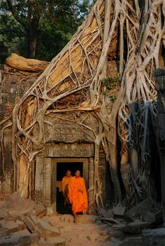 Buddhist monks at Ta Prohm Temple in Angkor, Cambodia