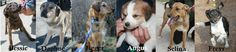 Rudozem Street Dog Rescue | Providing safety and shelter to street dogs and cats in Bulgaria