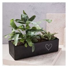 West Elm Modern Chalkboard Planter, Windowsill ($49) ❤ liked on Polyvore featuring home, home decor, office accessories, black chalk, west elm, west elm planters, modern planters and rock planters