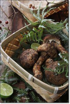 a matsutake mushroom