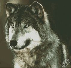 Wolf - Free Cross Stitch Pattern