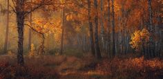 Photograph Woodland walks by Marat Akhmetvaleev on 500px