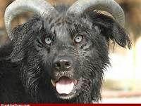 Hybrid Mutant Animals - Bing Images