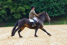 Castillon Horse