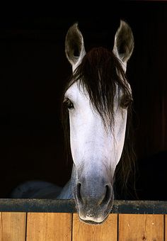 33 Magnificent Photographs of Horses
