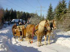 schlittenfahrt im schnee -