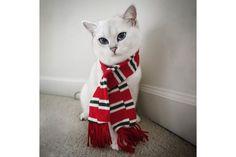 Será este o gato mais bonito do mundo? | P3