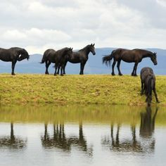 Tucked away in the Dargle Valley, KwaZulu-Natal, you'll find this working farm straigh out of your dreams. Victorian Bath, Comfortable Couch, Kwazulu Natal, Adventure Activities, Lounge Areas, Farm Life, Horses, Dreams, Animals