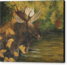 Giclee fine art paper and canvas prints from my original oil painting of a bull moose in autumn by a lake by Johanna Lerwick Wildlife / Nature Artist. Canvas Art, Canvas Prints, Painting Canvas, Original Art, Original Paintings, Bull Moose, Nature Artists, Wildlife Nature, Realism Art