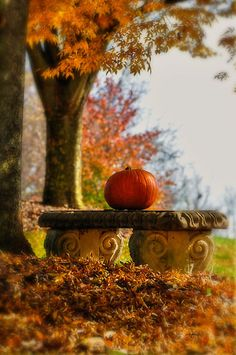 Like this idea of just a simple pumpkin on my concrete bench. Outdoor decorating ideas for fall. 'the last pumpkin' Harvest Moon, Fall Harvest, Autumn Day, Autumn Leaves, Happy Autumn, Autumn Song, Winter, Autumn Scenery, All Nature