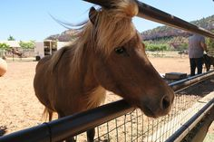 Mane Attraction | Horse training at Best Friends Sanctuary i… | Flickr