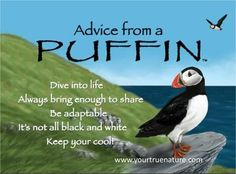 "Mother Advice from a Puffin: ""Always bring enough to share."" Your True Nature Animal Spirit Guides, Spirit Animal, Advice Quotes, Me Quotes, Lyric Quotes, Meaningful Quotes, Inspirational Quotes, Mother Nature Quotes, True Nature"