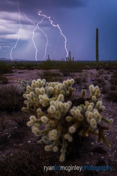 Lighting strikes behind a Jumping Cholla in the desert near Surprise, Arizona. Surprise Arizona, Landscape Photography, Beautiful Places, Country Roads, Sky, Lighting, Nature, Plants, Image