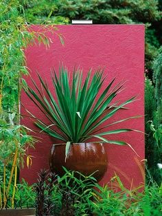 Use of colour and form can create a focal point in a small garden