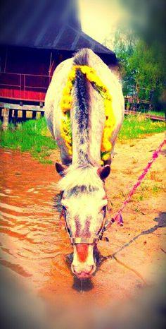 #Biba #Horses #UKJ_Bukowiec ❤