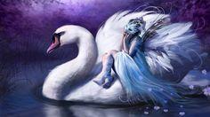 Swan riding (1920x1080, riding)  via www.allwallpaper.in