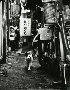 Hachioji, Tokyo