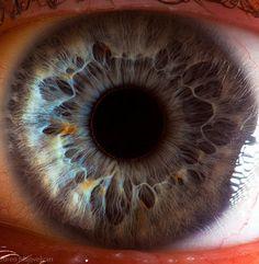 Extreme Close-Ups of Eyeballs by Suren Manvelyan   Photography   Lifelounge