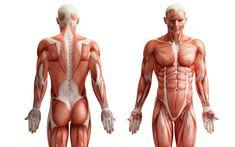 human body anatomy 3d
