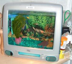 iMac Fish Tank.. You can recycle your old computers and convert it into a fish tank..