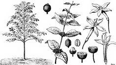 image94.jpg (500×282)