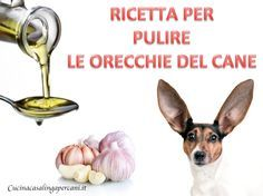 Ricetta per pulire le orecchie del cane