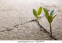 Weed Growing Through Crack In Pavement {NSAW: representing rebirth and/or resilience}