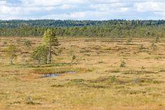 Kurjenrahkan kansallispuisto 28.9.201311:42. Kurjenrahka. Kurjenrahka mire.