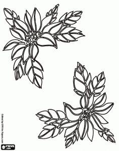 Toda clase de dibujos para colorear o calcar.  Flor de Navidad para decorar