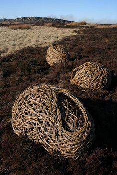 Laura Ellen Bacon - Nests