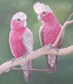 Parrot, Birds, Animals, Parrot Bird, Animales, Animaux, Bird, Animal, Animais