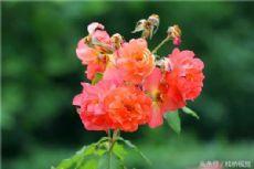 Summer flowers adorn Qingdao Botanic Garden