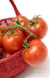 Tomato Photograph - Tomatoes by Bernard Jaubert