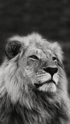 of Wild Life Animals Wallpapers for iPhone. wildlife animals More