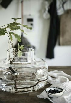 You Need Gardening Insurance For Anyone Who Is A Managing A Gardening Organization Lite Frn Skogen Nordic Interior, Interior And Exterior, Indoor Garden, Indoor Plants, Indoor Flowers, Plants Are Friends, Plant Shelves, Interior Plants, Glass Containers