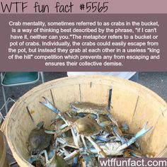 : Crab mentality - WTF fun facts | April 2 2016 at 11:23AM | http://www.letstfact.com